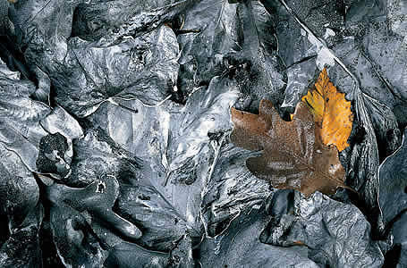 Leaves In Chrome